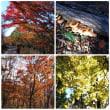 池田山(924m)(大津谷登山口からピストン) ~晩秋の風情を満喫する~