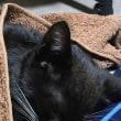 黒猫ジジィです。実はくるみが・・・