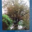 『アンネの木』(くもん出版)