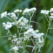 山小屋の周りの花