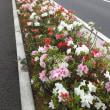ツツジ、藤 初夏の花が見頃 (2018/04/22)