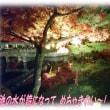 京都の夜の紅葉「永観堂 禅林寺」は凄い人でした・・・!もみじのライトアップが素敵