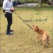 保護犬譲渡会へ応援にゆく!