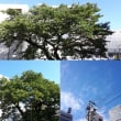 10月2日(火)今日の北川桜