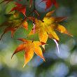 湯河原の紅葉