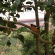 探鳥会2月(縮景園)