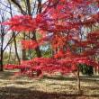 晩秋の森 、森のお祭り