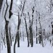 樹氷に包まれた大万木山を歩く(その2)