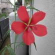 我が家の草花たち