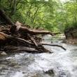 第176話 「川とともに…」