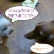 2017 8/16★今日はたろう君・キラ君・あずきちゃんです♪