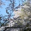 桜見てきた~(^_^)