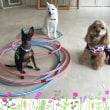 8月1日(火)…犬との暮らし方教室&パソコン教室
