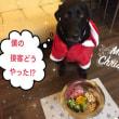 23/24メリークリスマス!