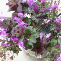 春分の日 野の花
