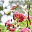 派手なユリの花