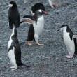 お帰りヒゲペンギン