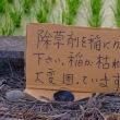 稲に除草剤をかけないで下さい