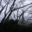 早春の鎌倉;おろち桜・魯山人窯跡・成福寺・水道山・鎌倉中央公園周遊