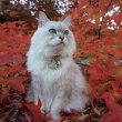 秋・・・紅葉がきれい