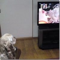 テレビにくぎ付け♪♪