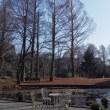 服部緑地‥都市緑化植物園内500品種1150本の椿山へ 3