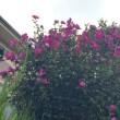 きせつの花