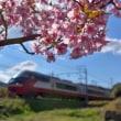 名鉄特急と桜