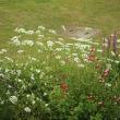 ガイラルディア グレープセンセーション  +秘密の花園⁈