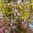 玄関飾り・冬バージョンから春模様へ+初春の絵ハガキ