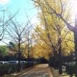 名古屋の紅葉をまわる2