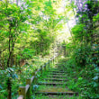 森の遊歩道(17)~3の3