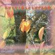 『 わけもなく季もえらばず冬紅葉 』物真似575冬zrm1205