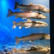 自然を再現した展示が評判な山の水族館へ行きました