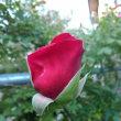 花盛り136