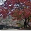 冬桜と紅黄葉Ⅲ