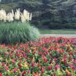 昭和記念公園秋の花