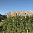 都立神代植物公園で驚きのものを発見