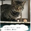 野良猫?トラ
