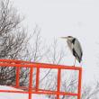モエレの鳥たち 1/18 トビの消えたモエレかな・・・