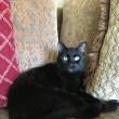 僕、黒い猫です。
