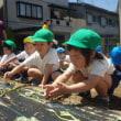 あお・みどり 3・4歳児 お誕生日会☆芋の苗植え