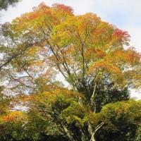 10/19(木)のPACニュース~暮らし&身近な法律・判例の情報