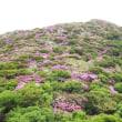 国立公園雲仙のミヤマキリシマ開花情報(第2号)