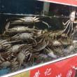 上海蟹食べに