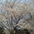 桜の季節が長いと言われても