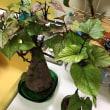 台所の盆栽