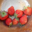 今日の収穫 リーフレタス ニラ 初めてのスナックエンドウ イチゴ