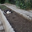 猫とカラスと朝〇族