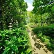 超広角10ミリレンズで撮った猛暑の赤塚植物園